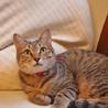 おとな猫大好き!な美人系キジちゃん サムネイル4