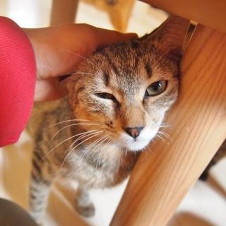 おとな猫大好き!な美人系キジちゃん