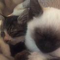 11匹の猫ちゃんの里親募集