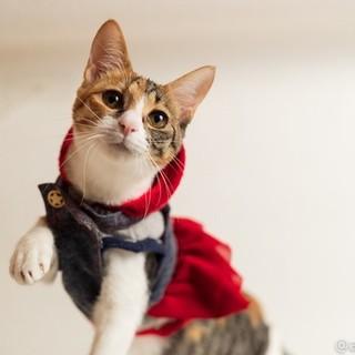 元気で懐こい三毛猫 ネルちゃん♪
