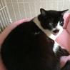 おじいちゃん猫ダンディに穏やかな余生を サムネイル3