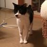 おじいちゃん猫ダンディに穏やかな余生を サムネイル4