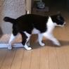 おじいちゃん猫ダンディに穏やかな余生を サムネイル5