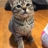生後3か月位のキジトラ♀ サムネイル2
