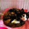 行き場の無い島の猫たちに暖かなお家を サムネイル2