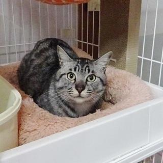淡路島から猫を迎えてくださる方募集しています