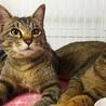 淡路島から猫を迎えてくださる方募集しています サムネイル2