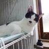 淡路島から猫を迎えてくださる方募集しています サムネイル3