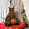 淡路島から猫を迎えてくださる方募集しています サムネイル6