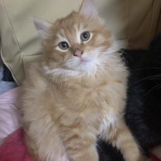 3匹の子猫ちゃんの里親さんを募集してます!