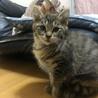 3匹の子猫ちゃんの里親さんを募集してます! サムネイル3