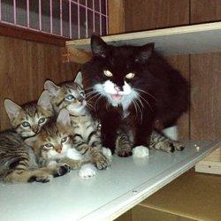 FIPにより家族の半分を失った子猫のお話、、その1