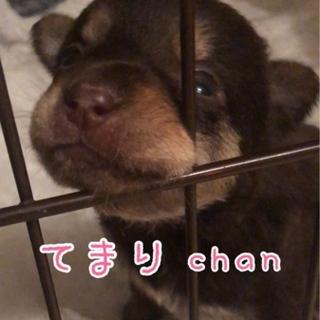 てまり chan ★ 1ヶ月