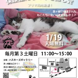 第74回 保護猫たちの幸せ探し会