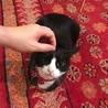 タキシード猫【マリモ】
