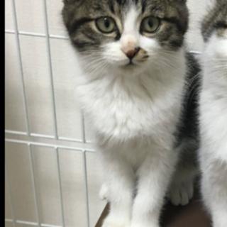 子猫2匹 オス、メス