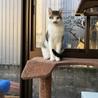 子猫の里親さん募集中 サムネイル2