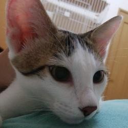猫の里親会 瑞穂区堀田 ブラザーミュージアムにて