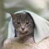 可愛い子猫の里親さんを探しています