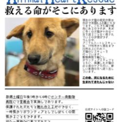 アニマルハートレスキュー 犬猫譲渡会 サムネイル1