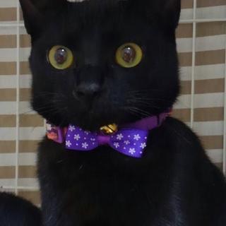 黒猫の「いっ君」です。