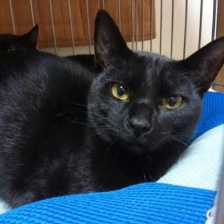 黒猫の「さんちゃん」です。