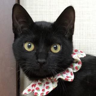 黒猫の「にぃ君」です。