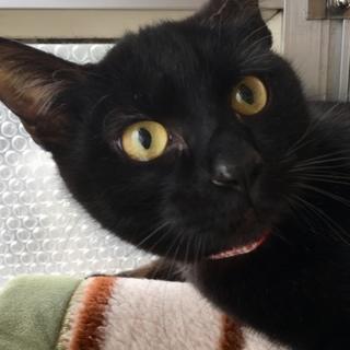 交渉中です。黒猫のサチちゃん7ヶ月