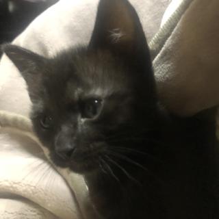 2ヶ月の子猫ちゃんです!