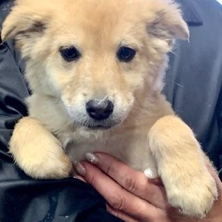 W11 可愛い子犬です。