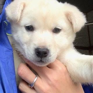M12 可愛い子犬です。