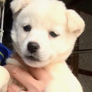 W13 可愛い子犬です。