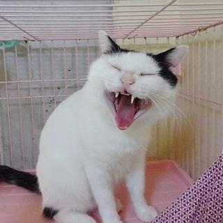 お笑い猫にゃ