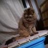 迷い猫。探しています。