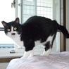 甘えん坊の可愛い黒白猫!