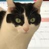 きりっとした白黒成貓(♀) サムネイル3
