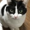 きりっとした白黒成貓(♀) サムネイル5