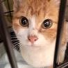 甘えん坊の子猫、トイレ完璧!
