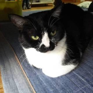 猫と仲良くできます。のんびり癒し系の女のこです