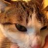 可愛らしいお顔の成猫です サムネイル2