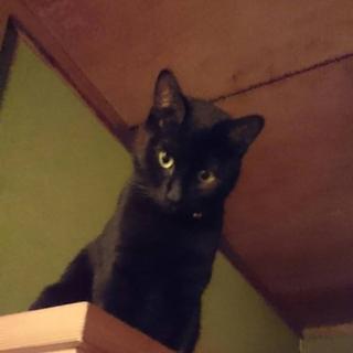 黒猫ちゃんと白黒ハチワレくん