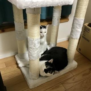 猫2匹里親募集中です