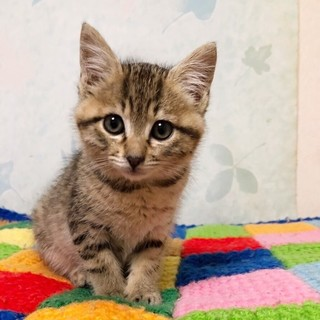かわいいキジネコちゃん