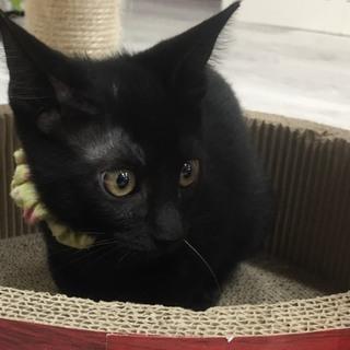 イケメン黒猫★あきら★遊ぶのが大好き