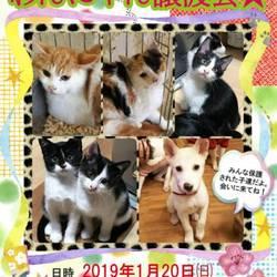 今年お初!可愛い犬猫譲渡会 開催します!