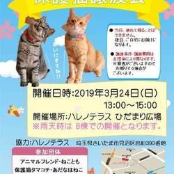 保護猫譲渡会inハレノテラス