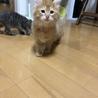 3匹の子猫ちゃんの里親さんを募集してます! サムネイル4