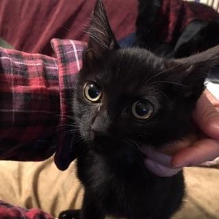 黒猫2匹兄弟