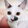 約4ヶ月 お目目パッチリ白黒猫☆みゅう☆