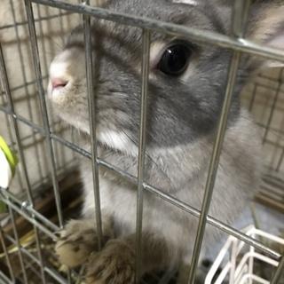 2歳の可愛いウサギちゃんです!!